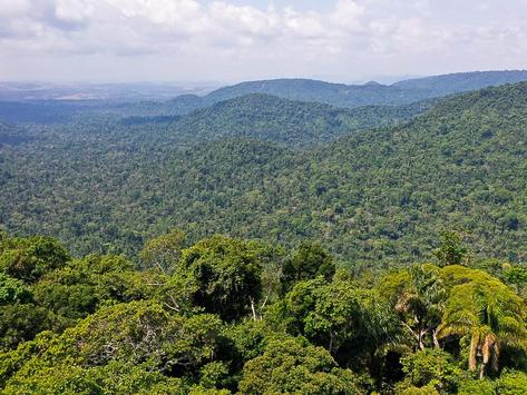 Manauara avalia que floresta em pé é bom para economia