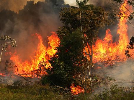 Bolsonaro mente enquanto 'bota fogo' na Amazônia