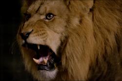 Transit / Lions