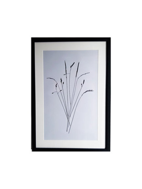 Tableau Herbes collection NATURE 64 x 44 cm
