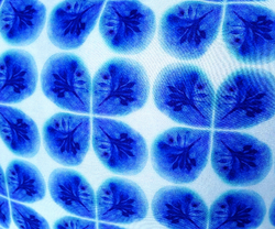Blue Bloom - BLOOMY