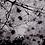 Thumbnail: Tableau Clématite Sauvage collection NATURE 60 x 40 cm