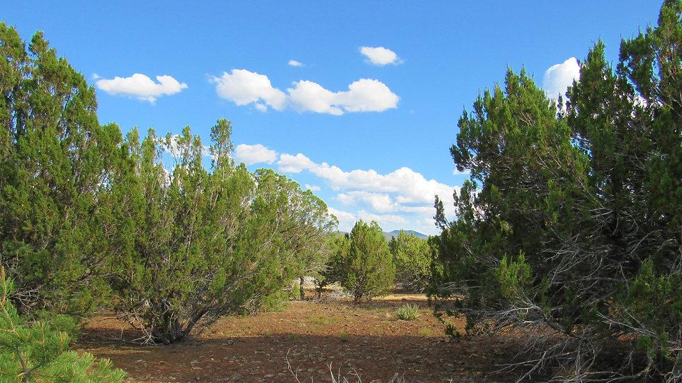 ARIZONA - Apache County - Cedar Ridge - Road N3323 Lot 61 (1.02-acres)
