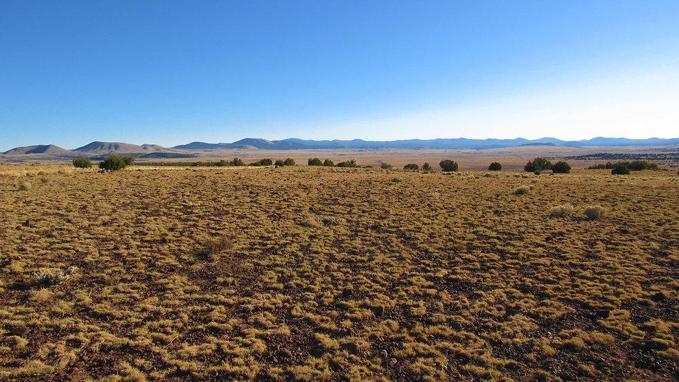 ARIZONA - Apache County - Concho Valley - Palm Lane Lots 197B C & D (3.12 acres)