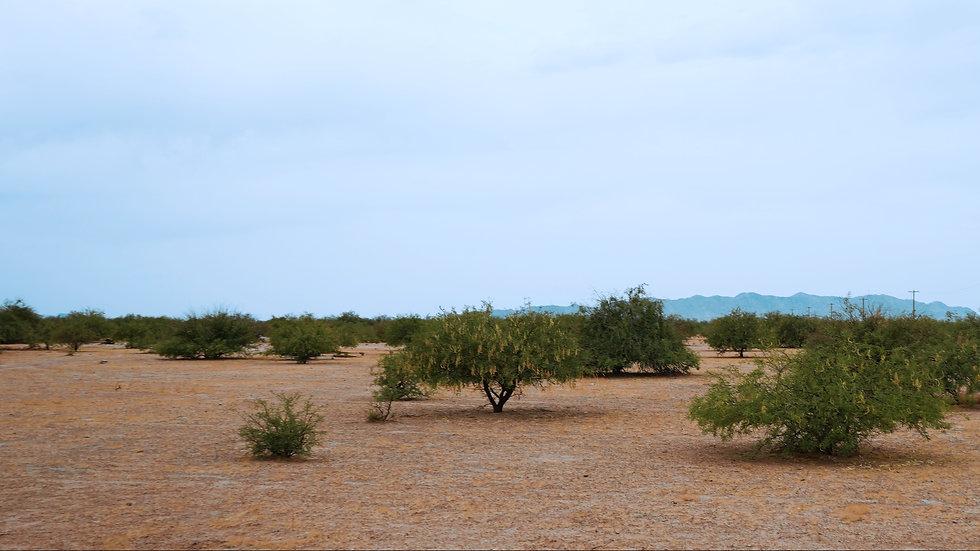 ARIZONA -Pinal County- Toltec/AZ Valley Unit 17 -3105 Chiricahua St. (0.3-acres)