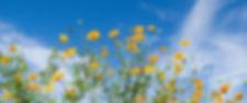 空と花背景b.jpg
