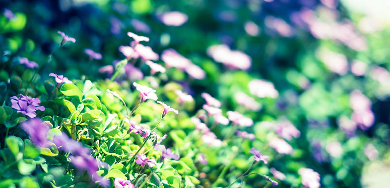 花背景b.jpg