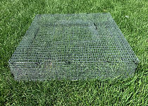 bait cage.jpg