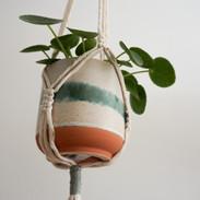 Jardinière plante