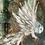 Thumbnail: Tin Owl, white wings