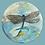 Thumbnail: Dragonfly Round