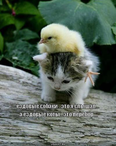 О  ездовых  котах  и  судьях-попугаях