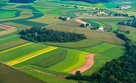 Аренда  государственных  земель  сельскохозяйственного назначения