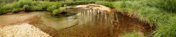 Spawning Pool, Upper Big Creek