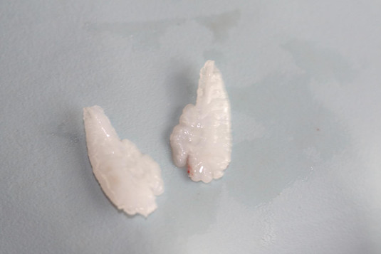 Chinook Otoliths