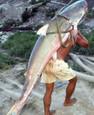 Large Piraíba Catfish
