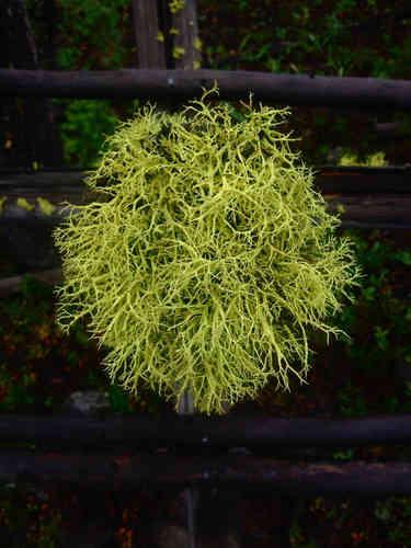 Lichen at Brian's Cabin, Edwardsburg