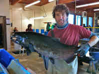 Jens Hegg with large adult Fall Chinook salmon at Lyons Ferry Hatchery