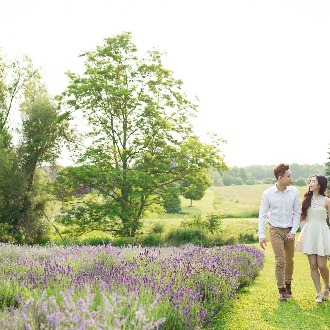 Lavender Engagement Photo