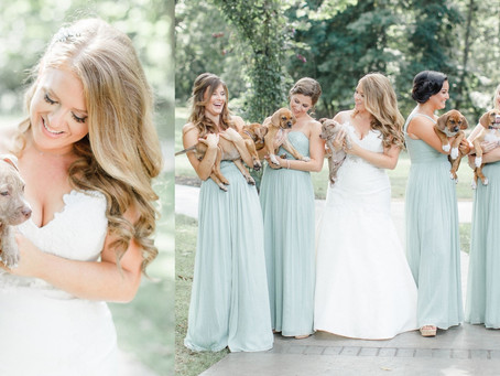 Rescue Puppies in the Wedding