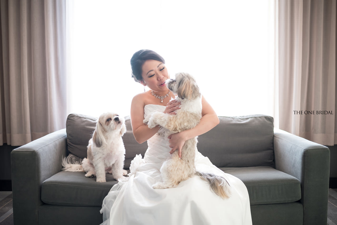 Bride and Shih Tsus