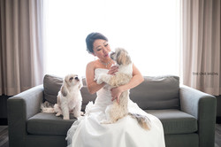 Bride and Shih Tsus