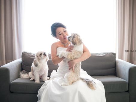 Bride and Lovely Shih Tsu