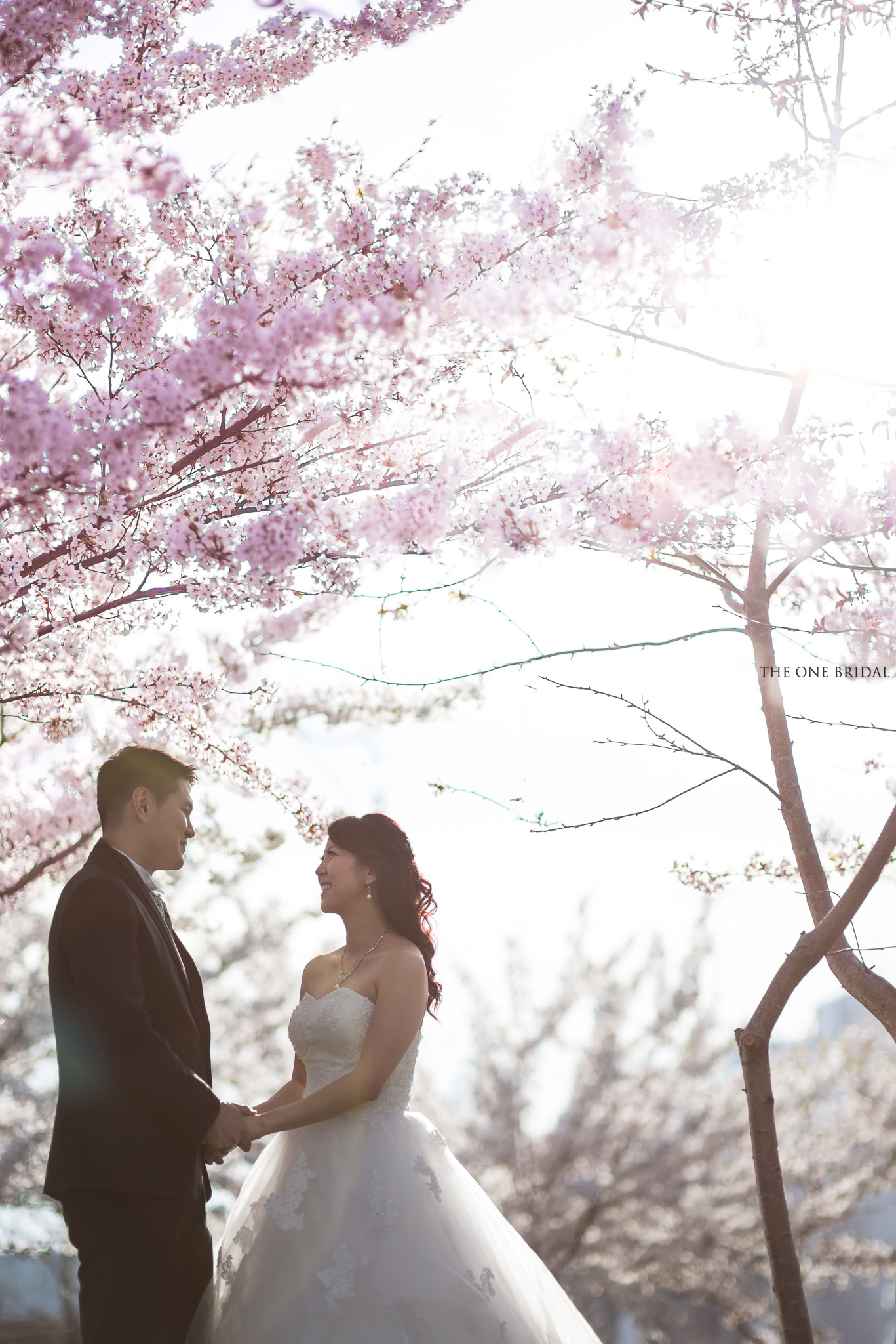 Cherry Blossom Tree Pre-wedding