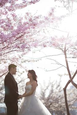 Cherry Blossom Tree Pre-wedding