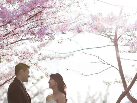 Cherry Blossom Pre-wedding Photo in Toronto