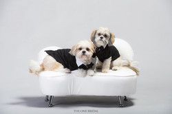 Pet Portraits by THE ONE BRIDAL