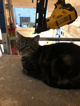 Worksite Supervisor Tiny the Cat