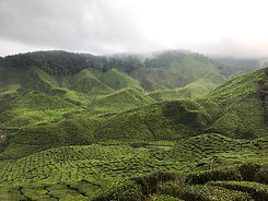 MY_Cameron Highlands.jpg