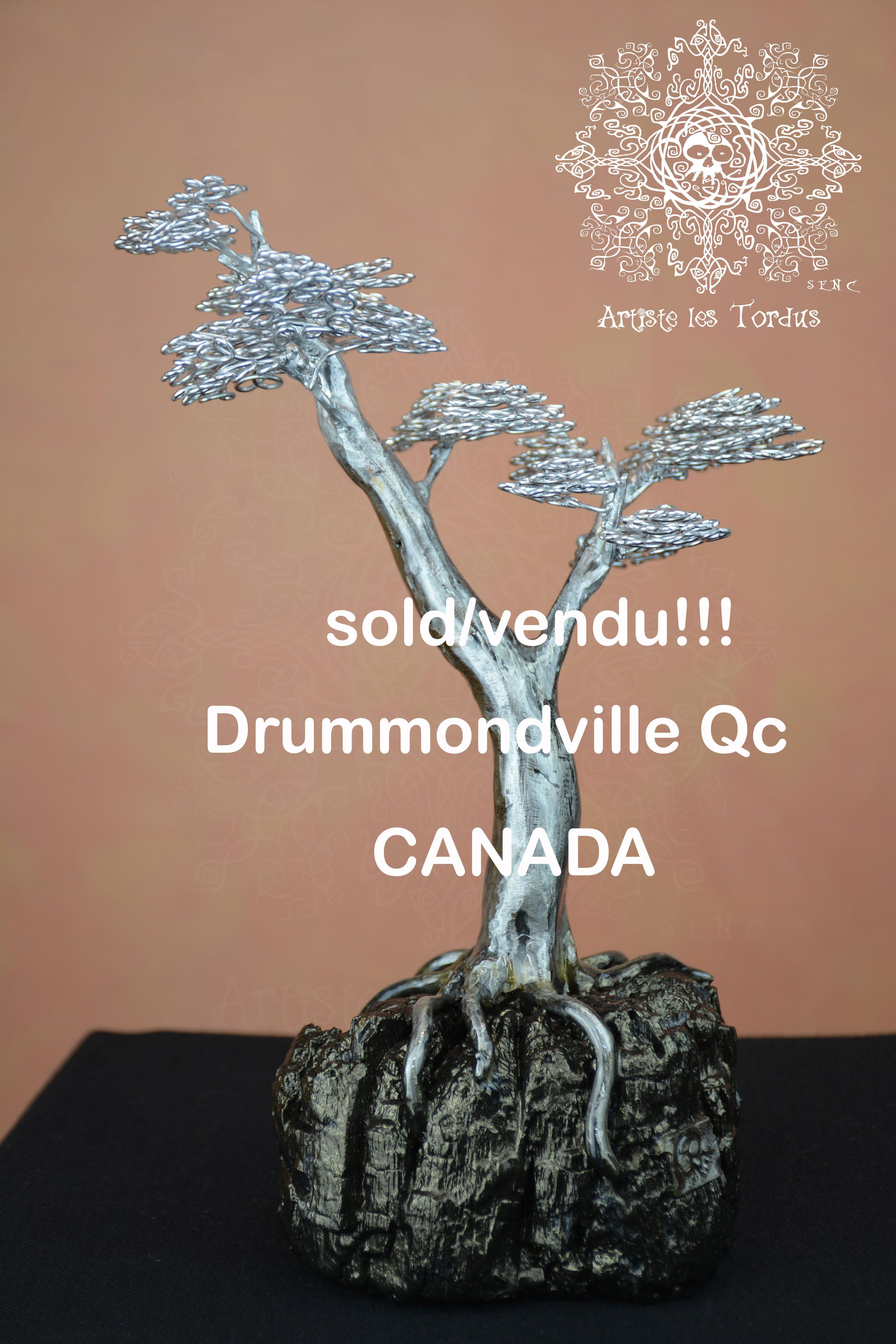 Petit Bonsaï, vendu, Canada