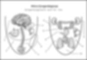 Zungendiagnostik_TCM.png