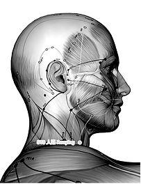 Akupunktur-Meridiane und Punkte bei Tinnitus in der Naturheilpraxis Doson