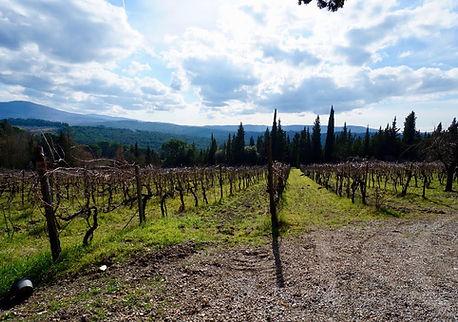 Vineyard in Chianti where our electric bike rental clients go