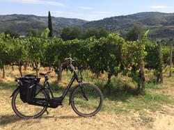 Amongst the vines on your e-bike
