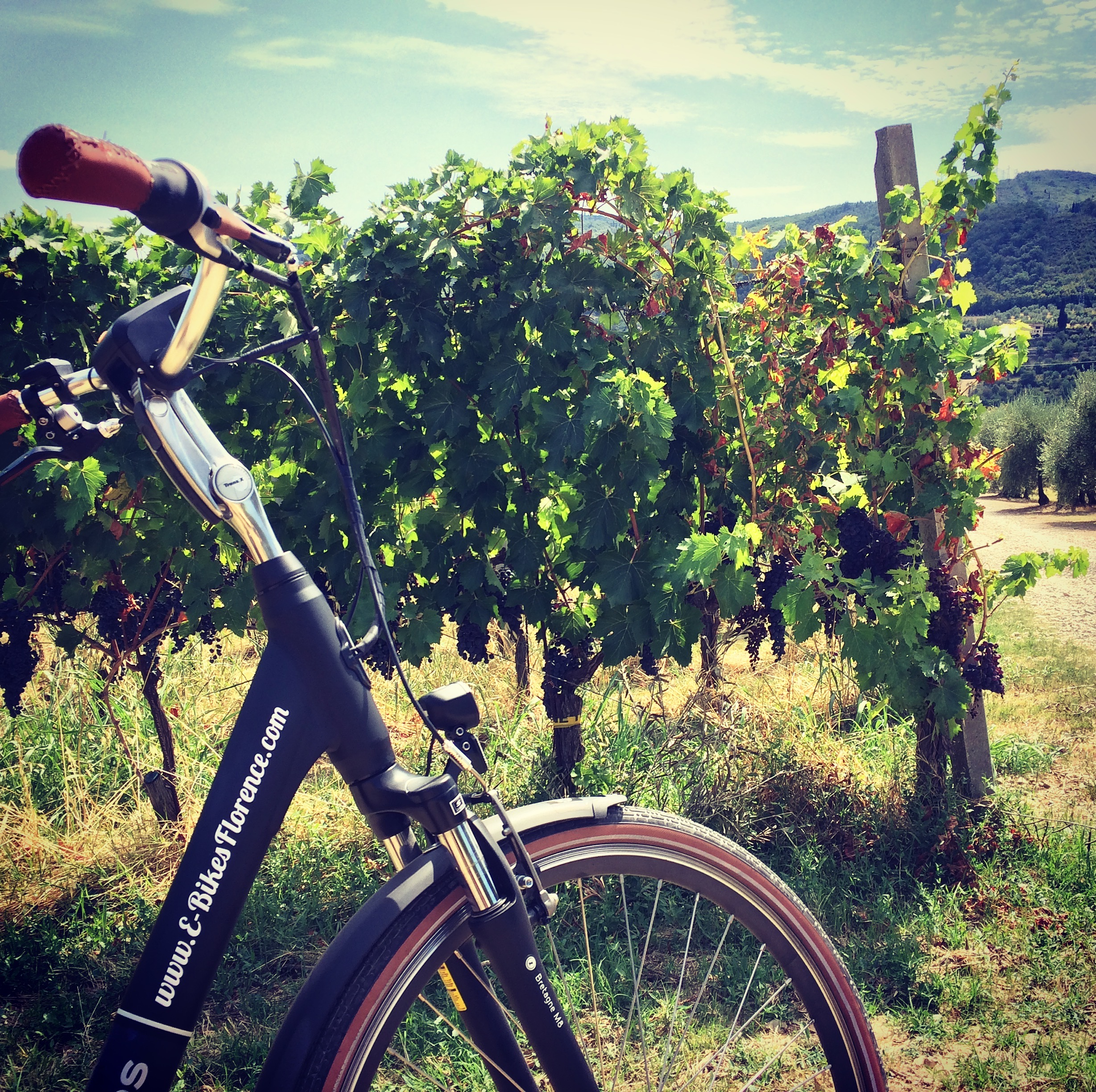 E-bike on Vineyard