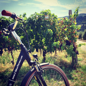 Cycle Through a Working Vineyard