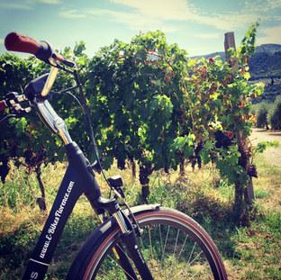 Cycle Through a Working Vineyard