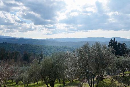 Vineyard in Chianti where our electric bik rental clients go