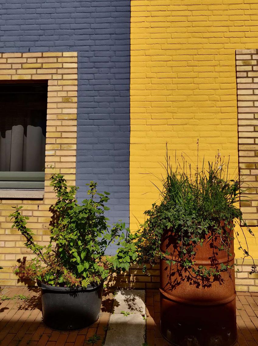 בתים בצהוב וכחול