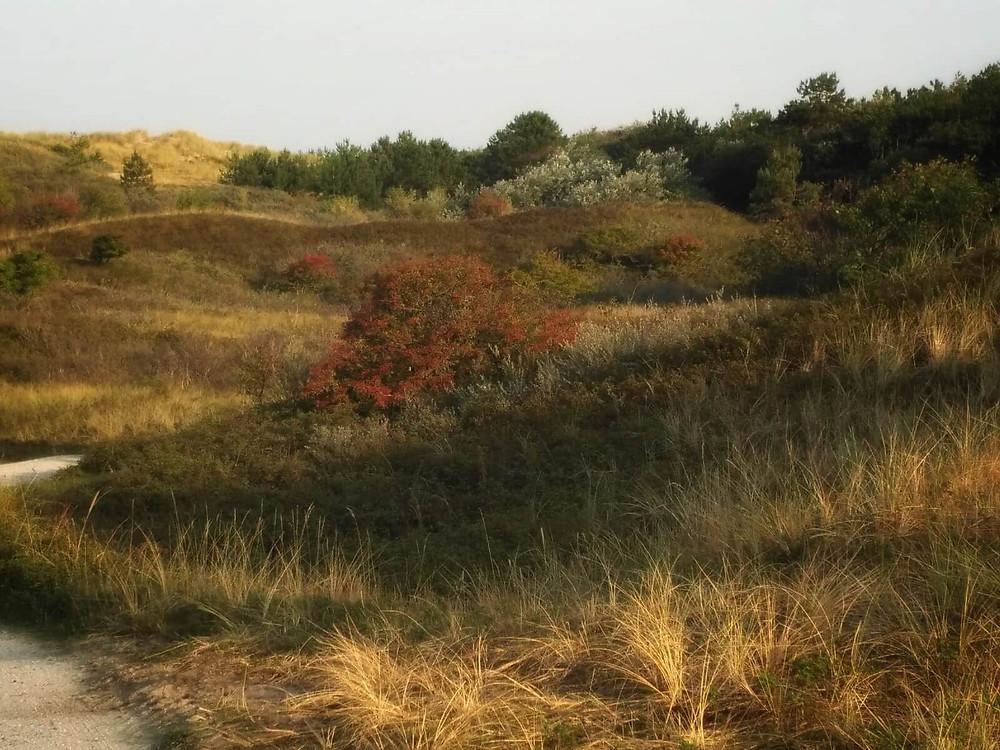 דיונות עם צמחיה נמוכה
