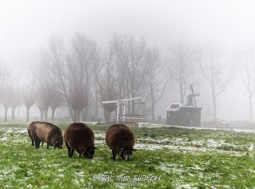 נוף הולנדי בחורף