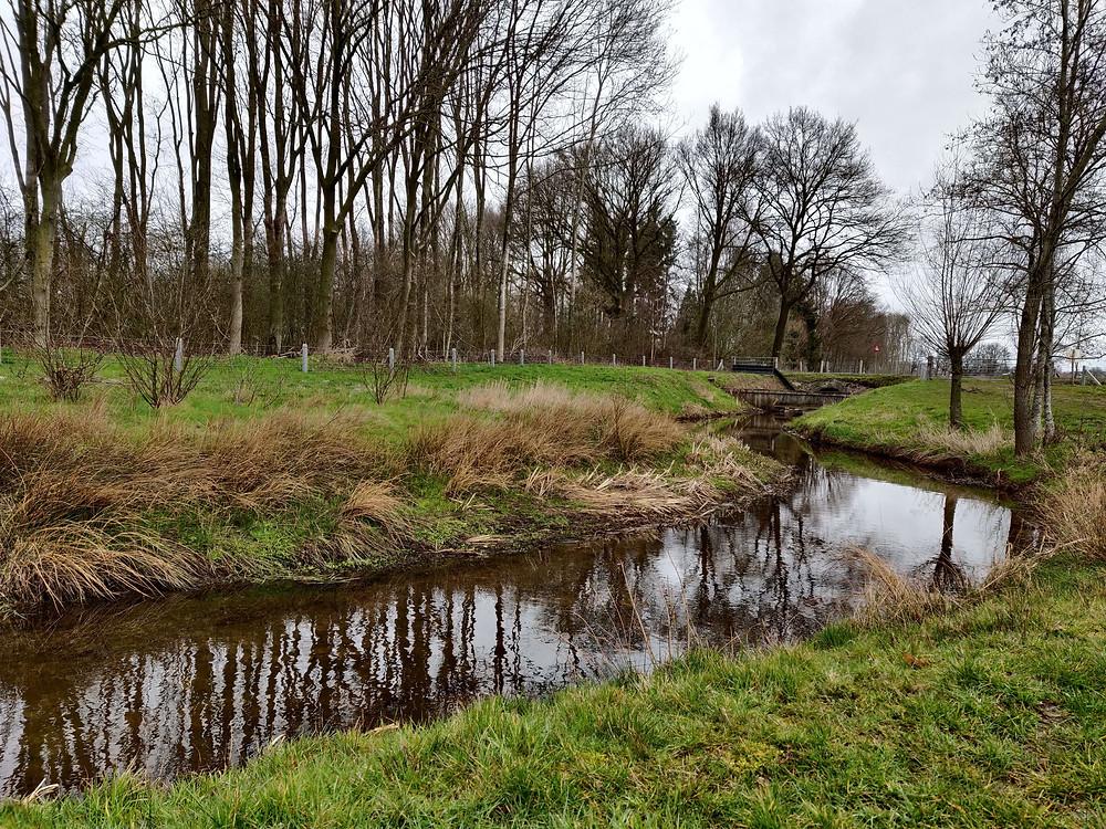 השתקפות של עצים במי הנחל