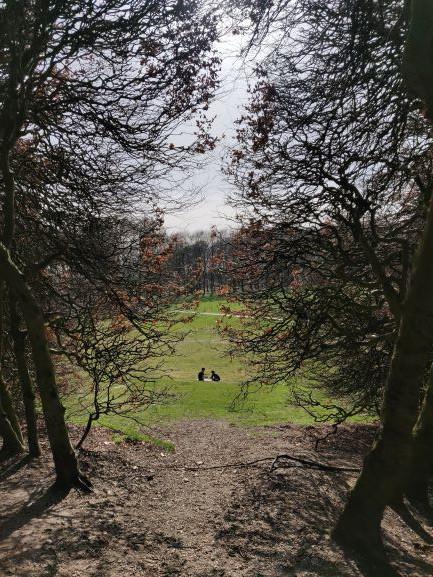 מבט ממנהרת העצים אל האחו הירוק