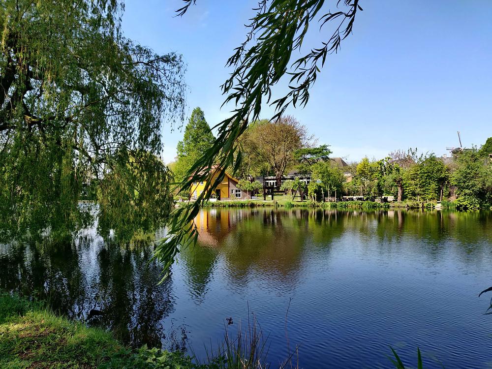 אגם וברקע טחנת רוח, ראבנסטיין