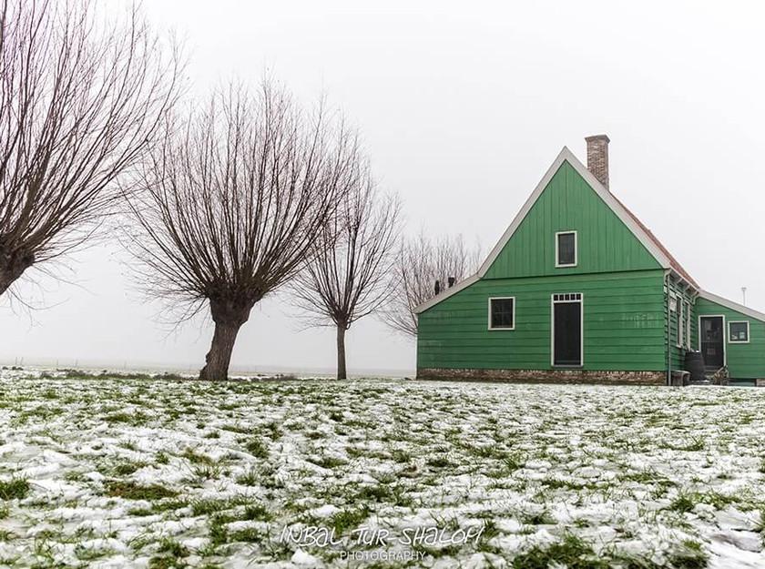 בית עץ ירוק