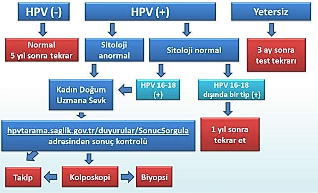 HPV Tedavi Algoritması